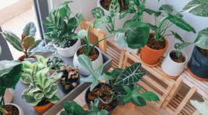 Najbolje biljke za unutrašnje prostore, koje će unijeti zelenilo i radost u vaš dom